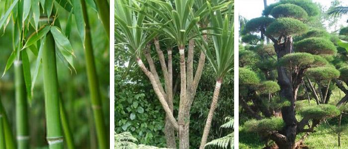 jual tanaman hias dan pohon pelindung